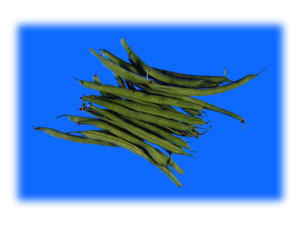 two new beans from america | archives | aggie horticulture