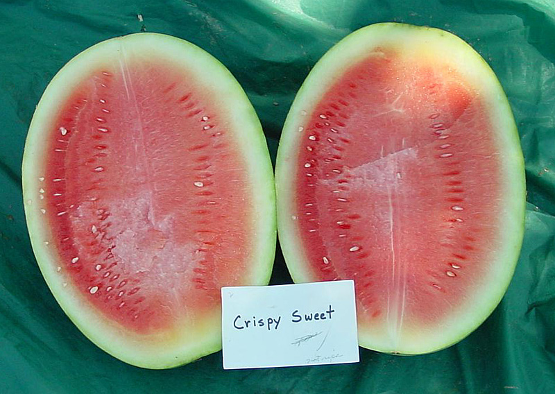Watermelon variety trials 2001 crispy sweet archives aggie