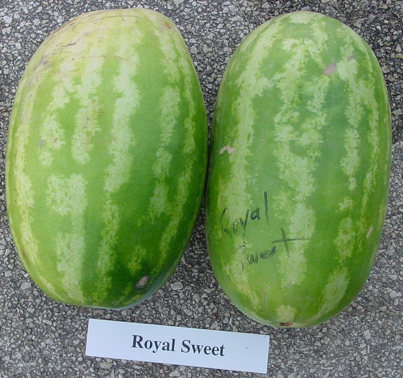 2003 Statewide Watermelon Trials Royal Sweet Archives