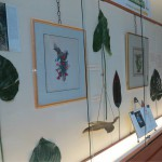 Margaret Mee Botanical Print Display