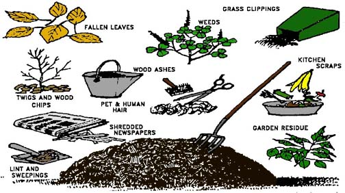 drawing of various organic materials used in composting, such as leaves, grass clippings and weeds