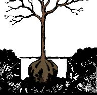 drawing of tree root ball in hole
