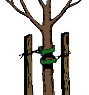 drawing of stakes on tree trunk