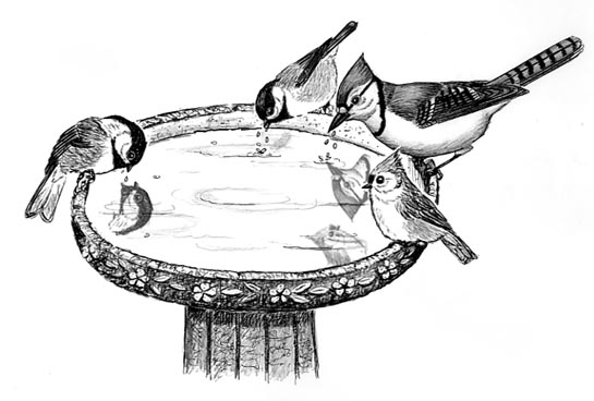 drawing of a birdbath showing several species of birds drinking from it
