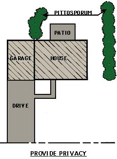 drawing showing line plantings used for privacy