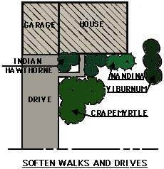 drawing showing plantings used to soften walks and drives