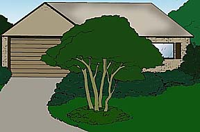 drawing showing a view of a house with a specimen planting