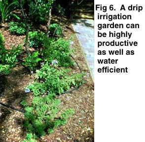 Efficient Use Of Water In The Garden And Landscape Earth