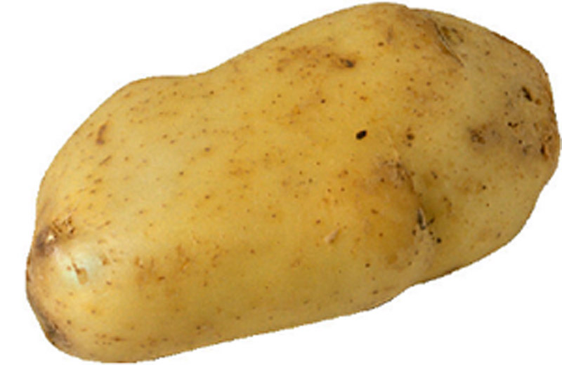 random picture of a potato
