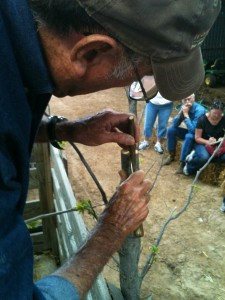 Larry Womack grafting pecans