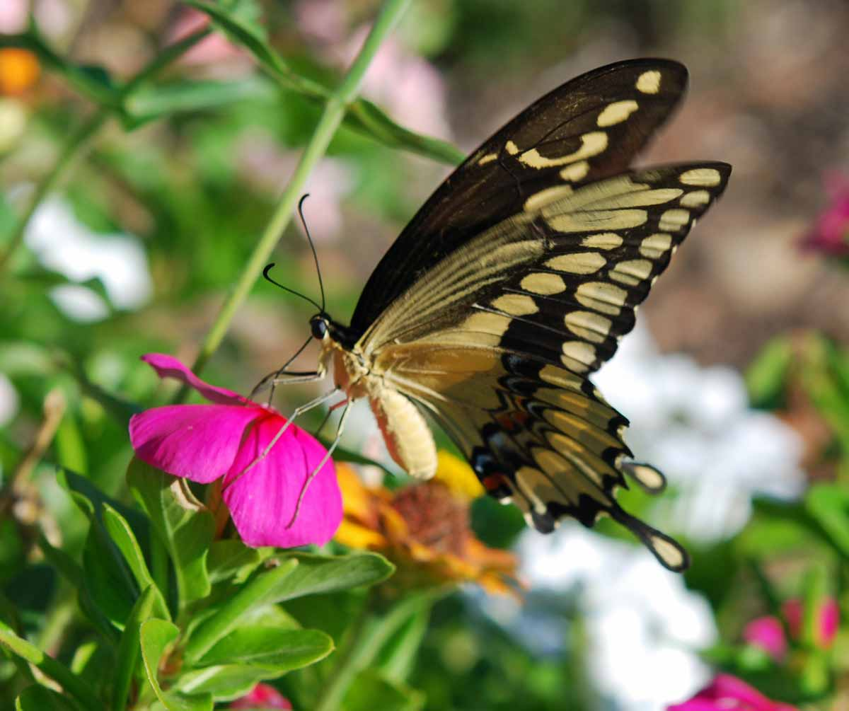 Insects Names, Meaning & Images | পোকামাকড় | Insects ...  |Insecta Insects