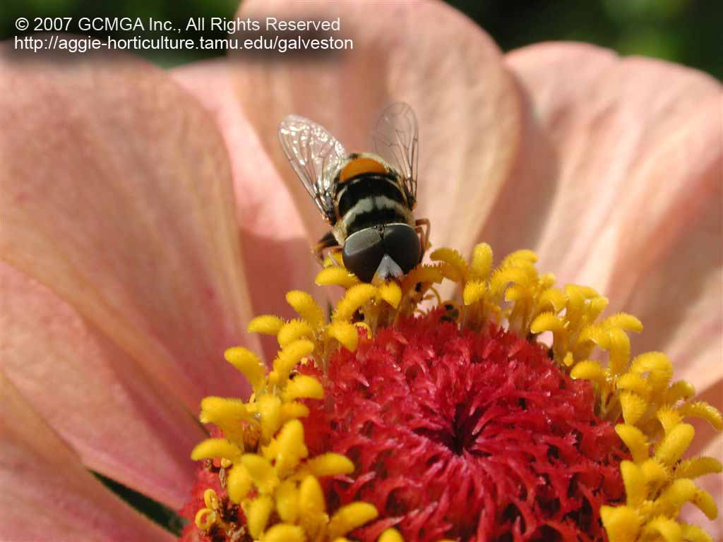 Beneficial Insects In The Landscape