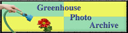 Greenhouse photo archieve