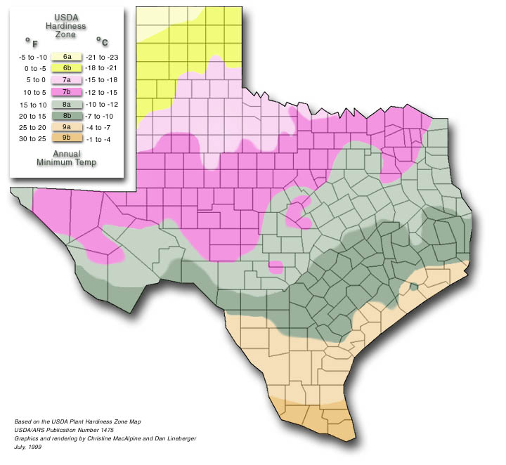 texas hardiness zones, Natural flower