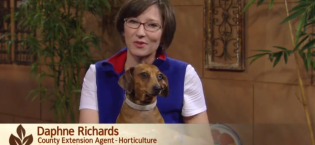 KLRU's Central Texas Gardener: Horticulturist Daphne Richards