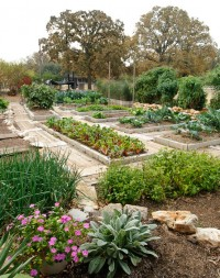 Dealing with Drought - Preparing for the Fall Garden @ Travis Co AgriLife Extension Service Office | Austin | Texas | United States