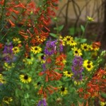 Dealing with Drought-Using Native Plants