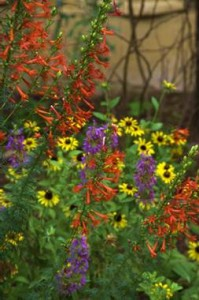 Dealing with Drought-Using Native Plants in the Landscape @ Travis Co AgriLife Extension Service Office | Austin | Texas | United States