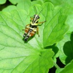 Effects on Insect Ecology: How You Can Help