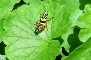 Effects on Insect Ecology: How You Can Help @ Texas A&M AgriLife Extension Service-Travis County | Austin | Texas | United States