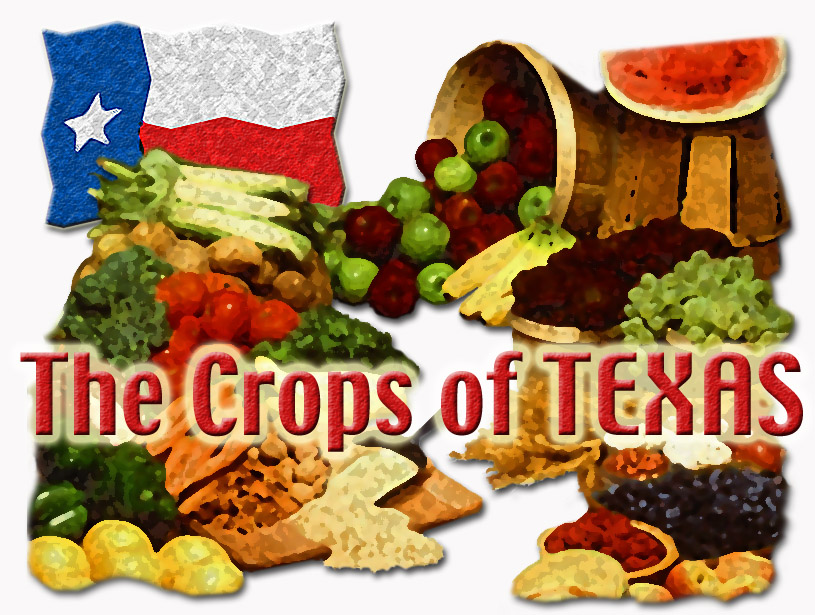 the crops of texas logo