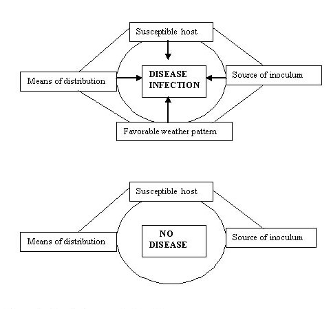 Figure 1 shows how four conditions are need for disease