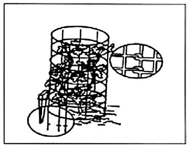 figure IV-8 shows a cage used to trellis a tomato