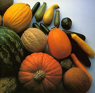 http://aggie-horticulture.tamu.edu/vegetable/problem-solvers/cucurbit-problem-solver/