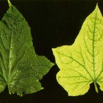 image of iron deficiency
