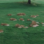 leafcutting ant mounds