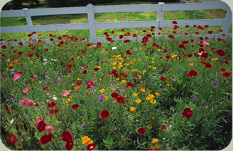 Recommended Wildflower Mixes