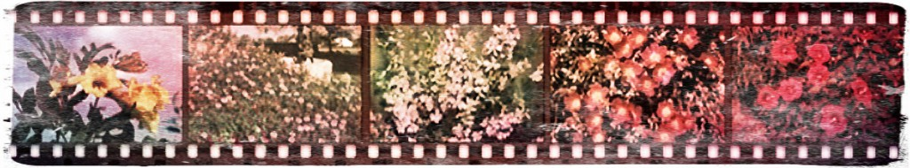 Filmstrip with images of plants